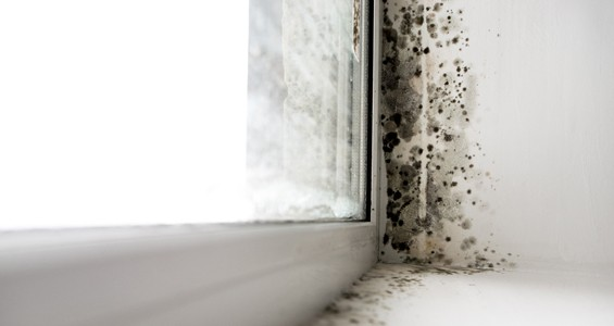 Leaky Buildings and Toxic Mould